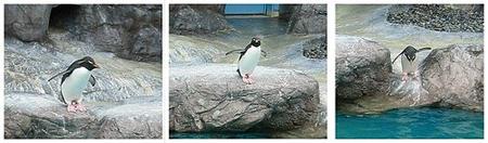 夏季清凉旅游 日本海洋馆