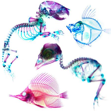 彩色动物骨骼,是科学还是艺术?