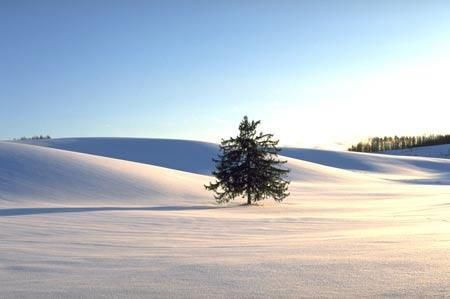 日本:邂逅初雪北海道
