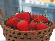 日本的水果 | (春、夏)