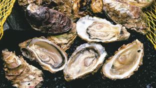 极致的海味新鲜——广岛牡蛎船KANAWA