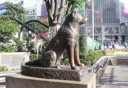 涩谷的忠犬八公像背后的故事