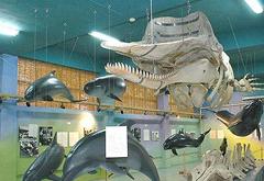 冲绳县文化的浓缩    名护博物馆
