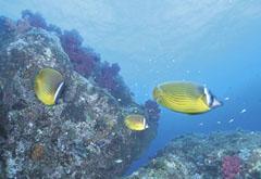 竹岛海底公园
