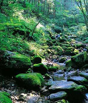日本岐阜县 诗一样的自然世界 - 旅游指南 - 欲望