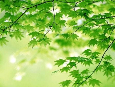 本研究发现决定植物叶子形状的基因