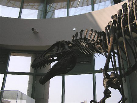 东京将举办恐龙展览会