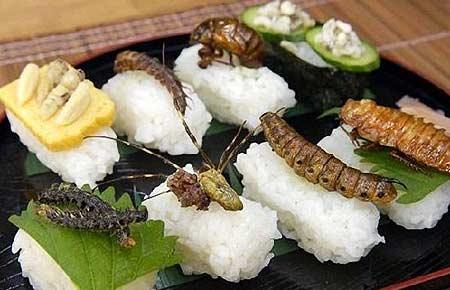 日本令人毛骨悚然的昆虫料理 你敢吃吗?