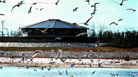 候鸟观赏之地 大阪南港野鸟园