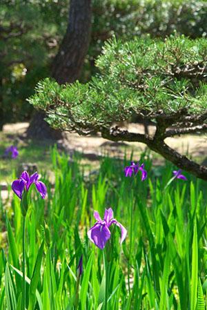 中日合璧的庭院 养翠园