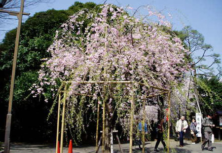 诗情画意的日本上野恩赐公园