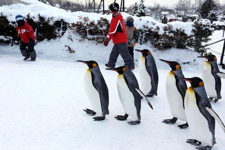 日本最北的动物园 旭山动物园