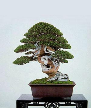 日本独特园艺 盆栽文化