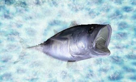 钓鱼新作《Fish Eyes 3D》将于6月23日发售