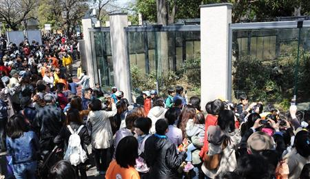上野动物园展出大熊猫 3千人排队入园 灾民可免费进入