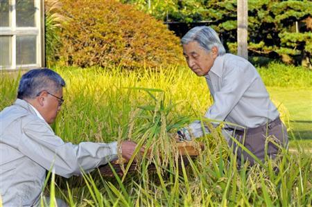 天皇当农民 下田收水稻