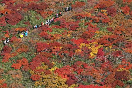 日本栗驹山红叶迎来最佳观赏时节