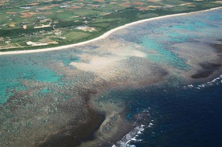日本冲绳县石垣岛拥有北半球最大规模的蓝珊瑚群