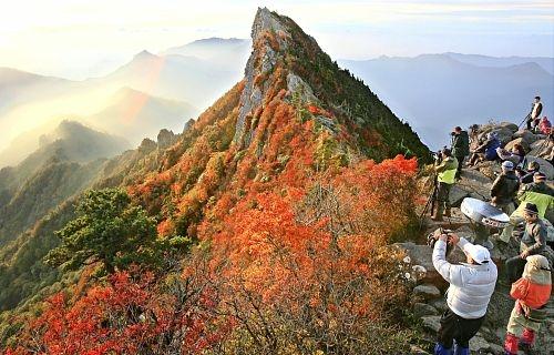 爱媛县西日本最高峰——石鎚山峰红叶绽放