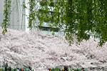大阪四季、气候与服装
