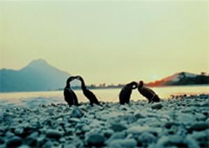 长良川的鸬鹚捕鱼