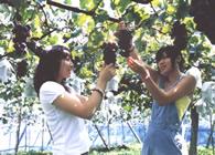 桃李馆 采摘水果