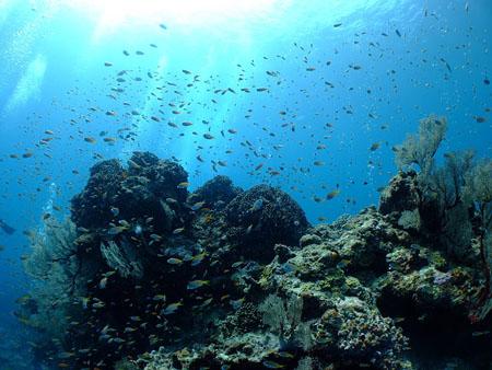 潜水爱好者的必选地 冲绳庆良间诸岛