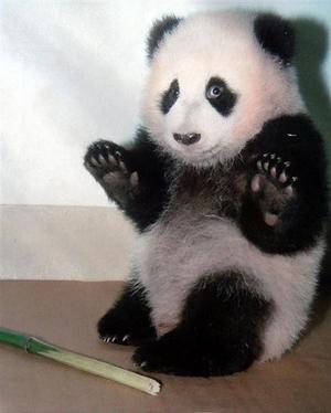 可爱至极的熊猫美食!