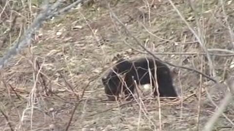 札幌 北海道 住宅区/摘要:北海道札幌的居民住宅区附近昨天出现一头黑熊,引起了居民...