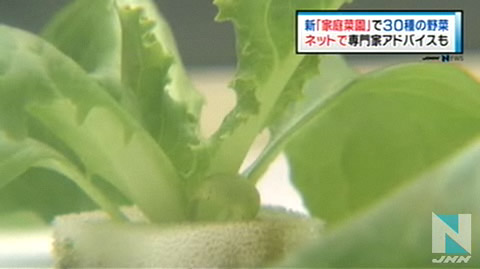 自己种菜最安全!日本推出家庭菜园可种30种菜