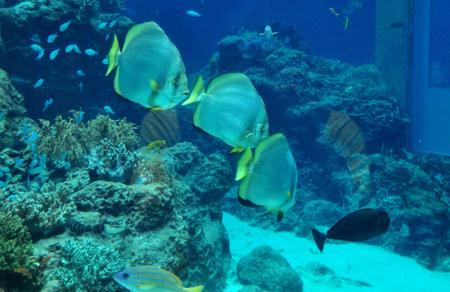 冲绳五彩缤纷的海底世界