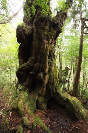 神秘植物王国屋久岛
