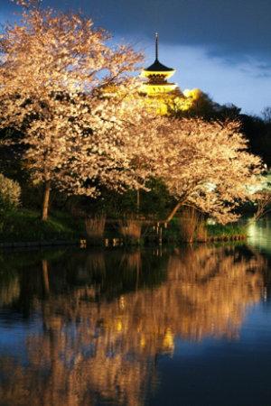 横滨传统庭院公园三溪园