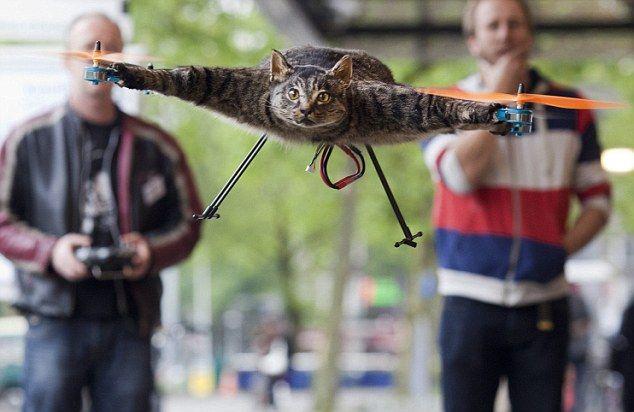 荷兰死猫被主人制成艺术直升机引日本网友热议