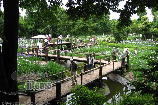 染谷花菖蒲园