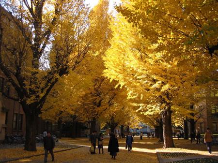 东京大学校园秋景 -世界大学排名出炉 东京大学亚洲第三图片