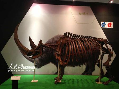 披毛犀骨骼标本