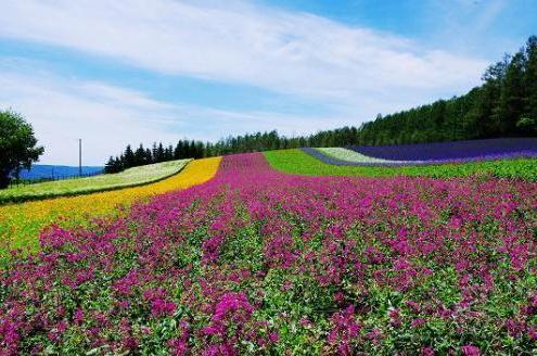 北海道人气旅行地推荐