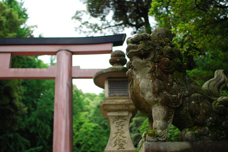 东瀛漫步——奈良初体验