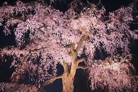 今晚住这里——京都元奈古旅馆