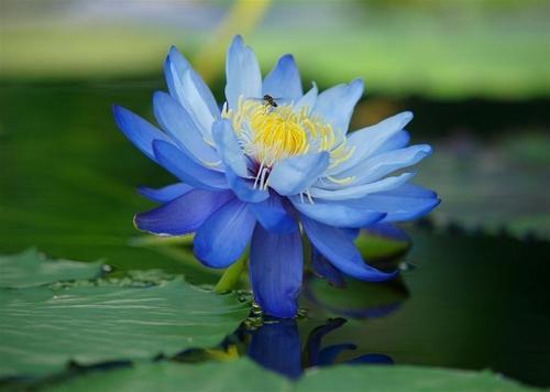 花的天堂•足利花海公园