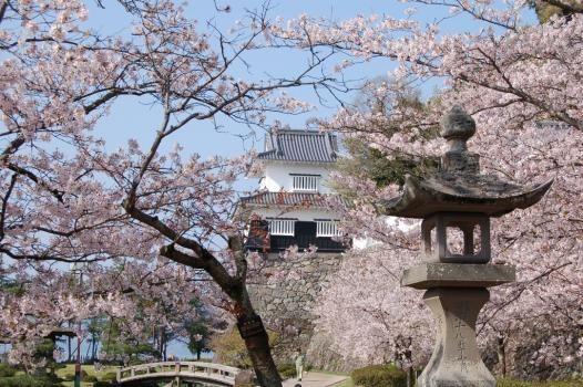 """长崎县大村公园,晚春初夏的""""花之城"""""""