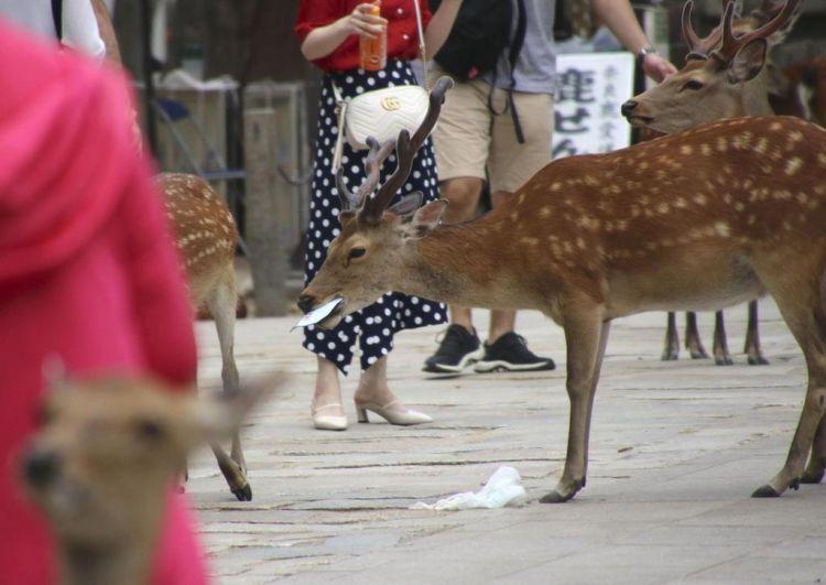 日本奈良鹿误食塑料袋死亡事故频发
