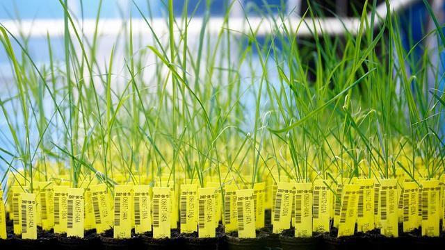 看日本是如何玩转基因编辑食品的