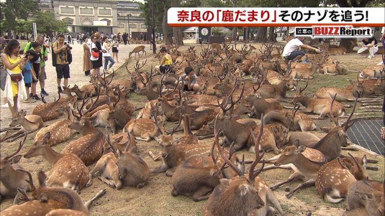 """奈良国立博物馆前出现的""""鹿群集会""""引起网民热议"""