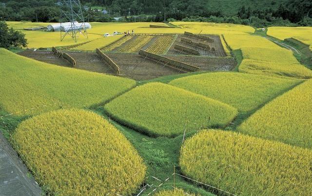 受溫室效應影響,日本或將面臨糧食危機