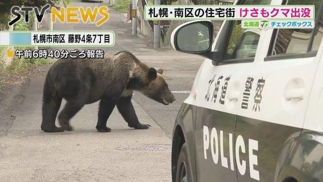 """""""熊出没""""之日本有没有圣母和键盘侠"""