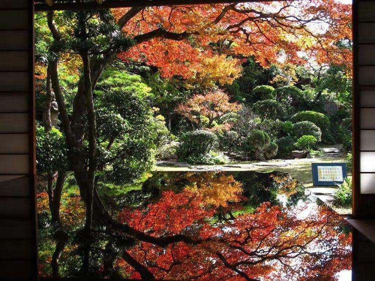 层林尽染,红叶迷醉,九州胜景等您来!