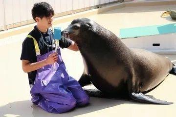 日本水族馆晒帅哥饲养员吸引游客,网友:我可以!