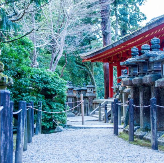 日本最古老的首都,除了观鹿,居然还能这么玩?